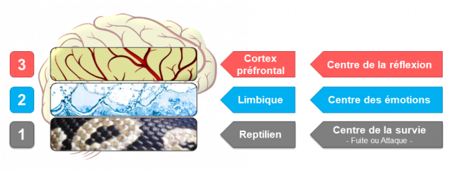 Cerveau Trioexplications