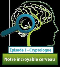 Serie cerveau2