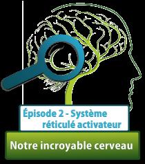 Serie cerveau C2